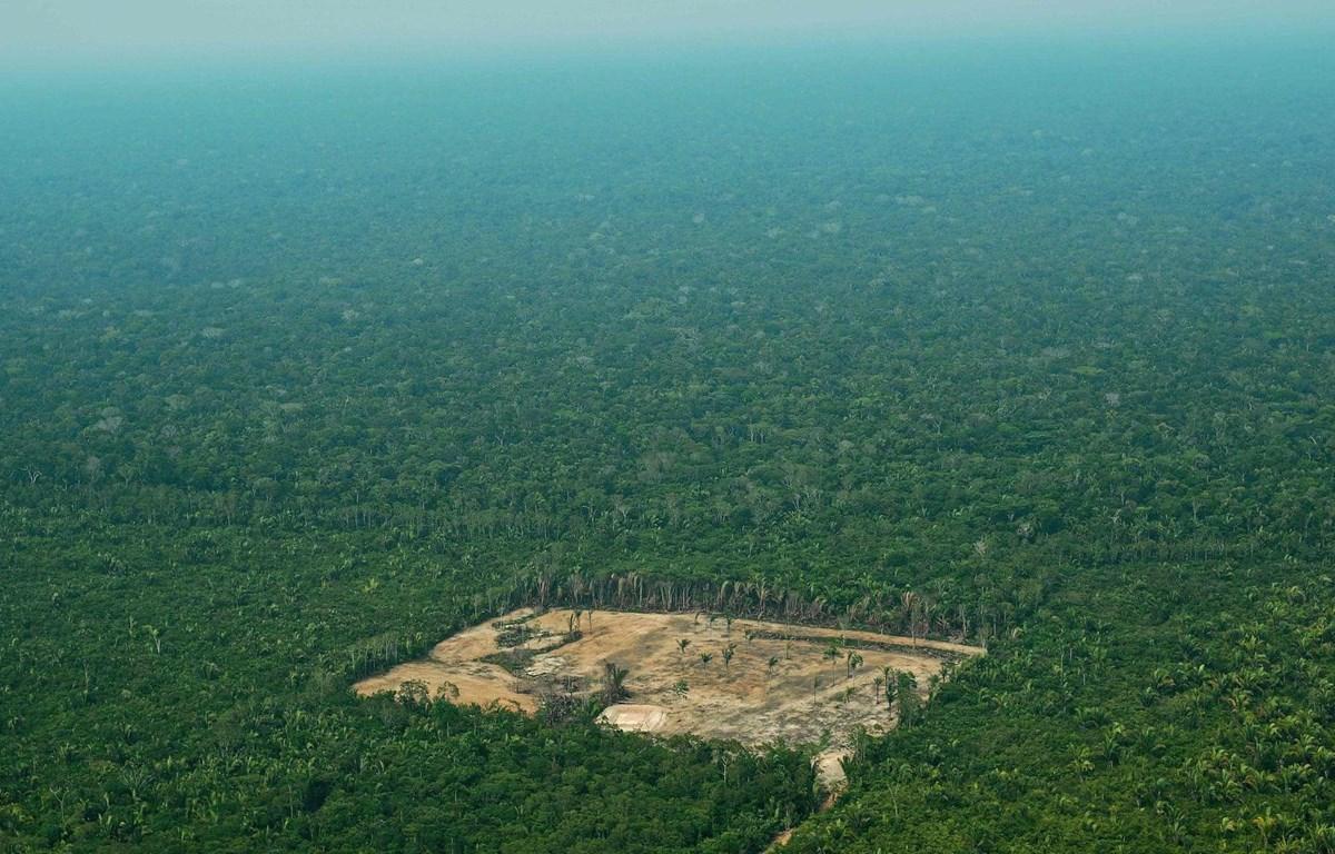 Một góc rừng Amazon. (Nguồn: AFP)