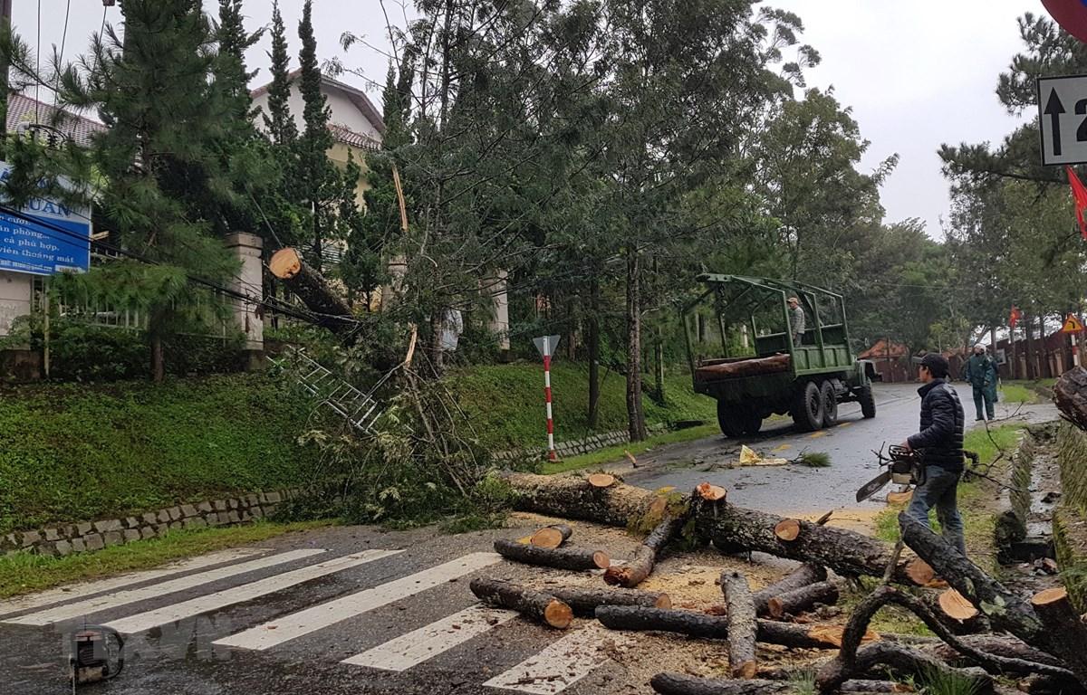 Gió lốc mạnh đã quật đổ 10 cây xanh trong thành phố Đà Lạt. (Ảnh: Đặng Tuấn/TTXVN)