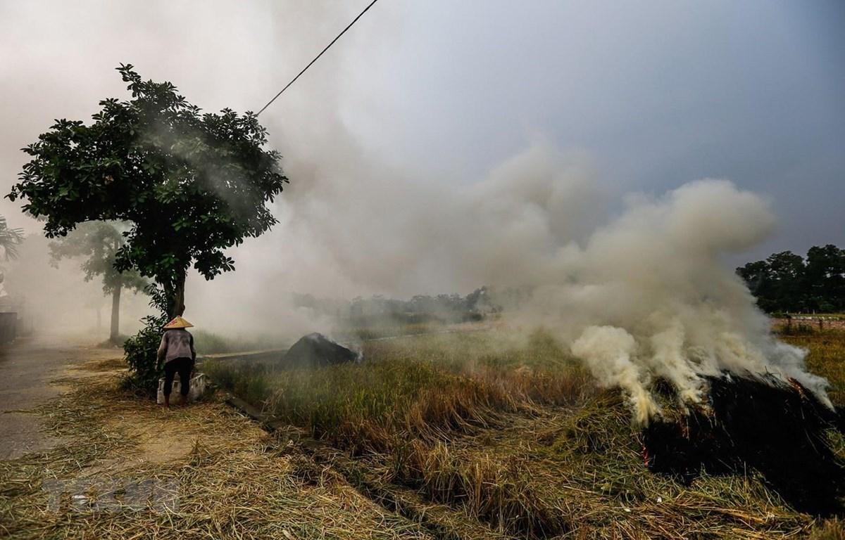 Đốt rơm rạ gây khói mù tại khu vực các xã huyện Quốc Oai. (Ảnh: Trọng Đạt/TTXVN)