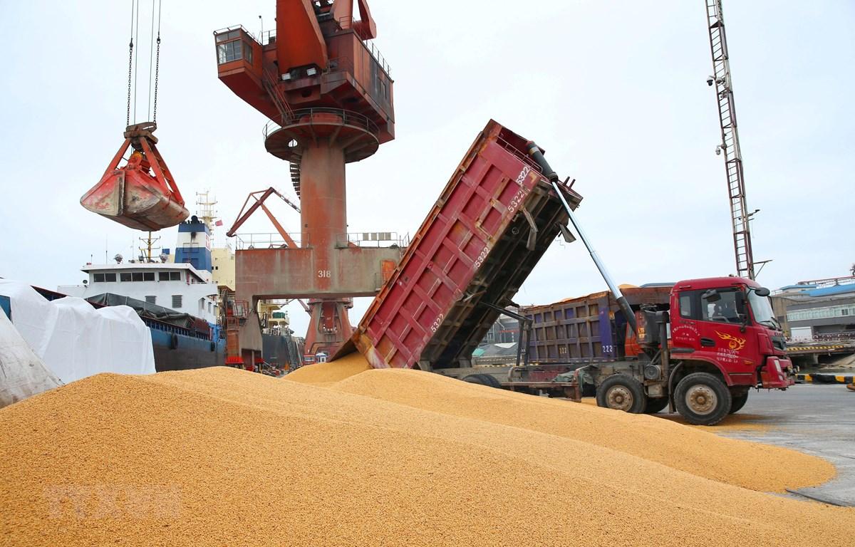 Bốc dỡ đậu tương nhập khẩu tại cảng Nam Thông, tỉnh Giang Tô, Trung Quốc. (Ảnh: AFP/TTXVN)
