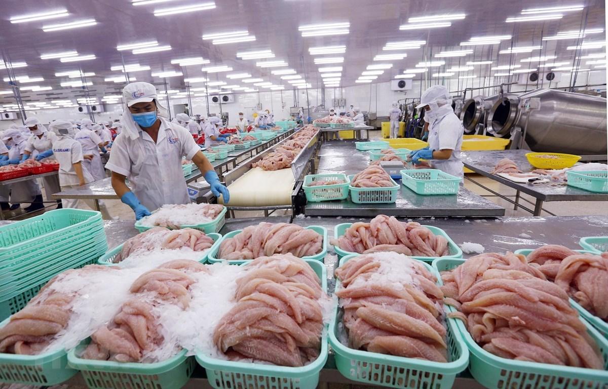 Chế biến cá tra xuất khẩu tại Công ty Cổ phần XNK Thủy sản Cần Thơ, một trong những mặt hàng có thế mạnh của Việt Nam trên thị trường quốc tế. (Ảnh: TTXVN)