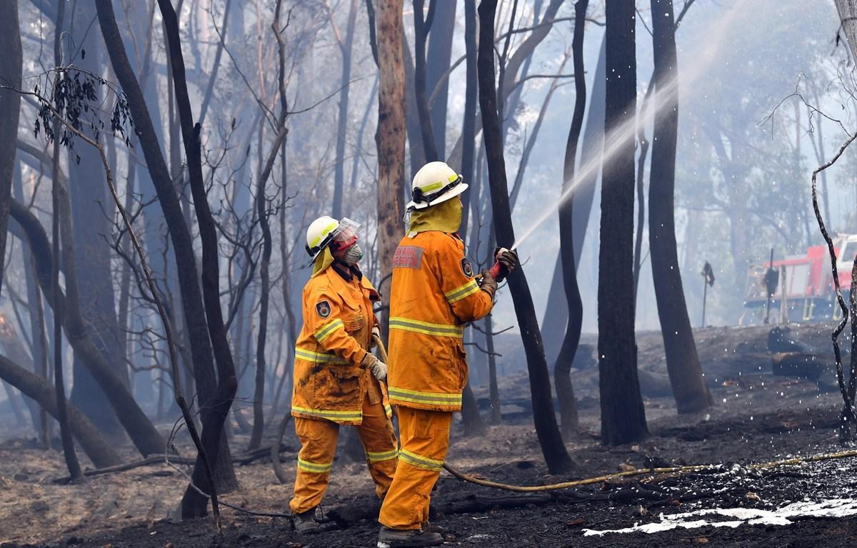 Lực lượng cứu hỏa nỗ lực dập lửa cháy rừng tại Dargan, Australia. Ảnh: AFP/TTXVN