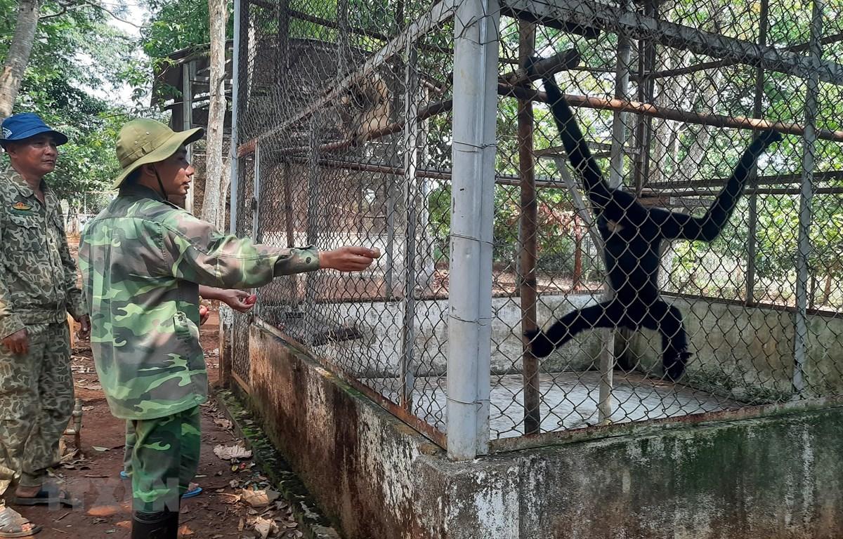 Động vật hoang dã quý hiếm tại khu Trung tâm cứu hộ, bào tồn và phát triển sinh vật được chăm sóc chờ ngày thả về rừng. (Ảnh: K Gửih/TTXVN)