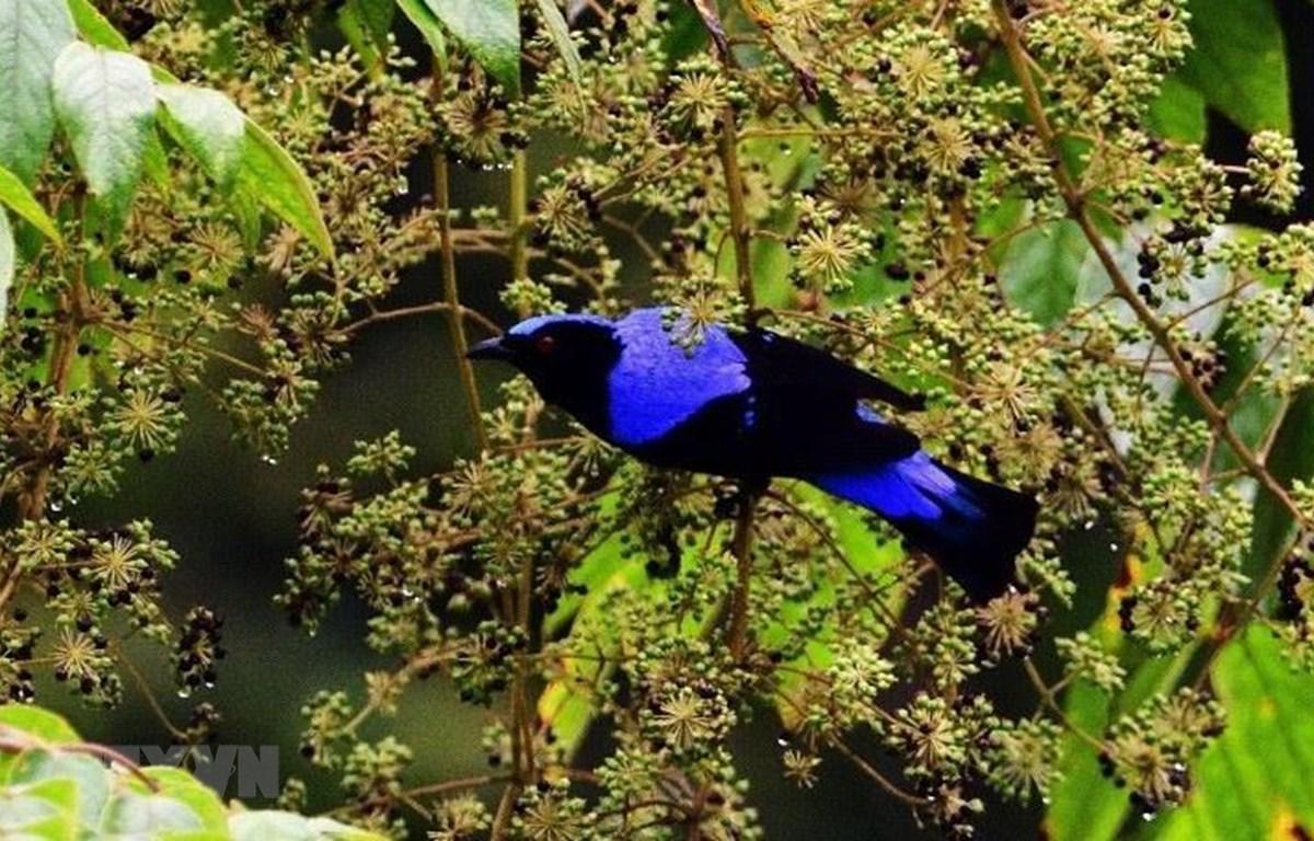 Hệ động- thực vật tại Cao nguyên Kon Hà Nừng phong phú, đa dạng với nhiều loại quý hiếm. (Ảnh: TTXVN phát)