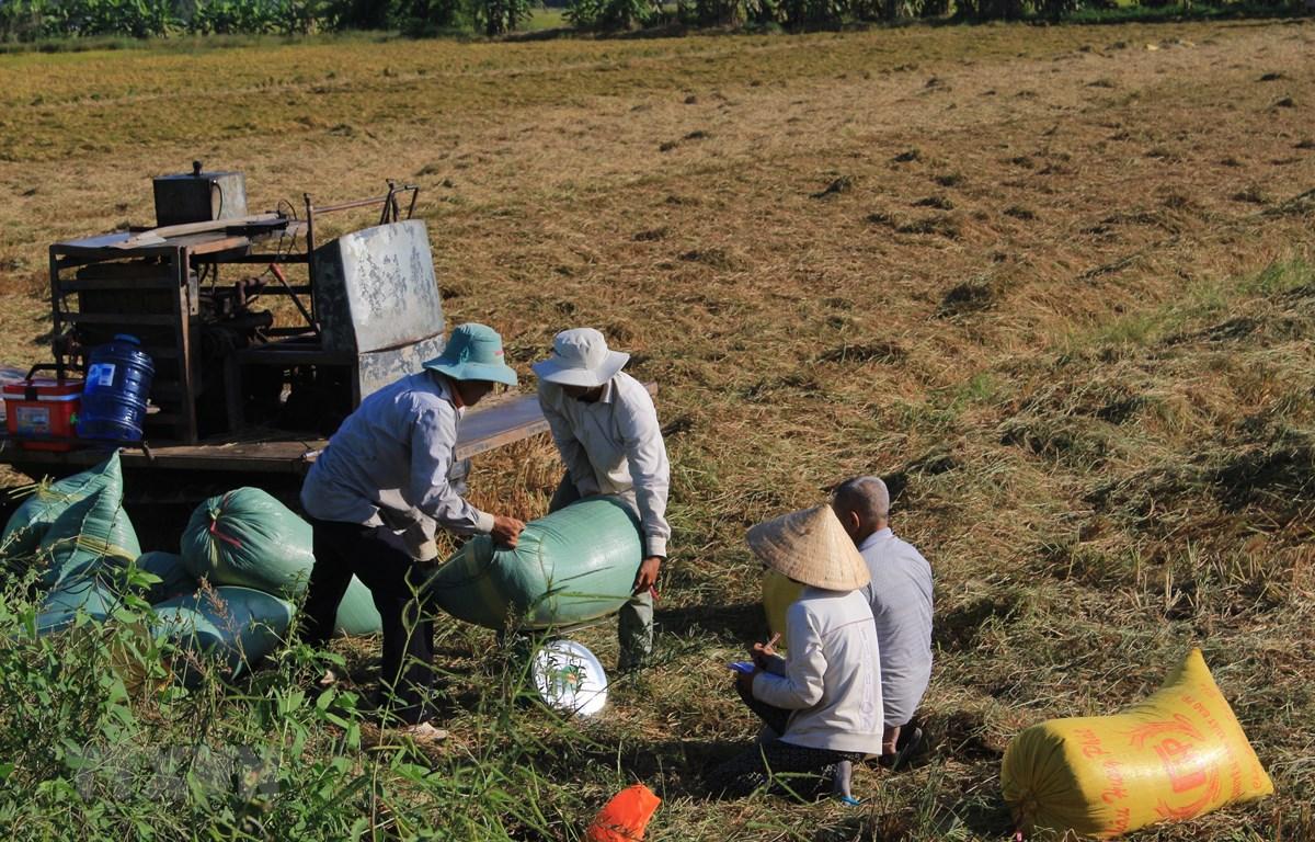Lúa vụ Đông Xuân 2018-2019 tại An Giang tăng 8.000 tấn so với cùng kỳ với sản lượng cả vụ ước đạt 1,735 triệu tấn lúa. (Ảnh: Thanh Sang/TTXVN)