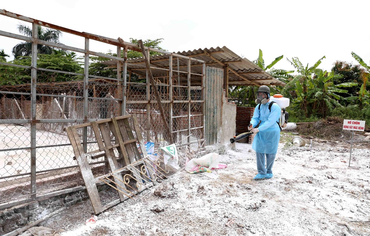 Nhân viên thú y phun thuốc tiêu độc, khử trùng theo quy đinh tại khu vực. (Ảnh: Vũ Sinh/TTXVN)