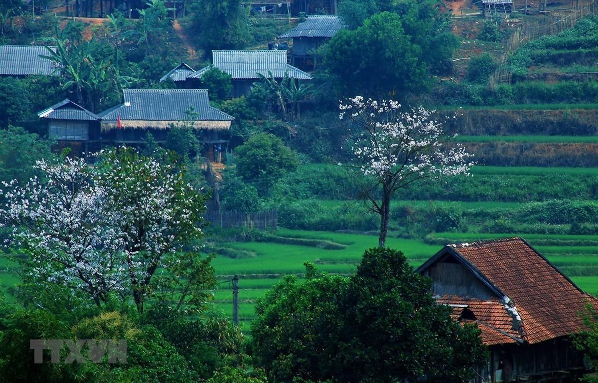 Hoa ban nở trắng núi rừng Tây Bắc. (Ảnh: Phan Tuấn Anh/TTXVN)