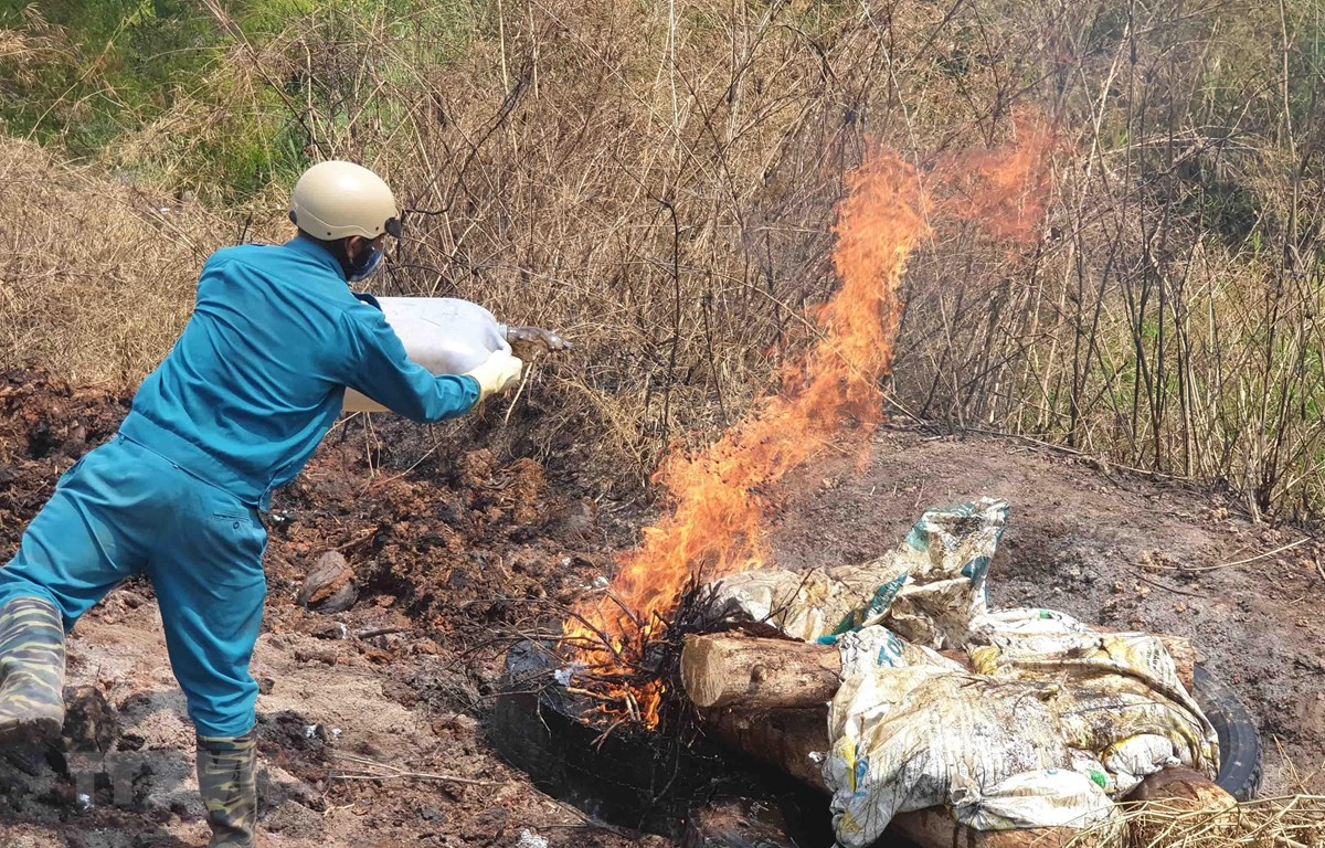 Lực lượng chức năng tiêu hủy xác lợn chết bằng phương pháp đốt tại chỗ để tránh lây lan mầm bệnh. (Ảnh: Nguyễn Dũng/TTXVN)
