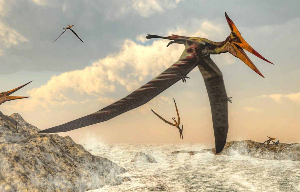 Phác họa về loài thằn lăn bay. (Nguồn: The Daily Beast)
