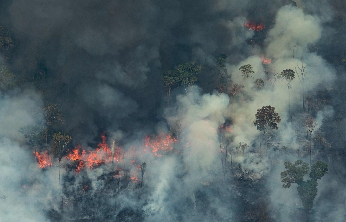 Khói lửa bốc lên từ đám cháy tại rừng Amazon ở Porto Velho, bang Rondonia, miền Tây Bắc Brazil, ngày 24/8/2019. (Nguồn: AFP/TTXVN)