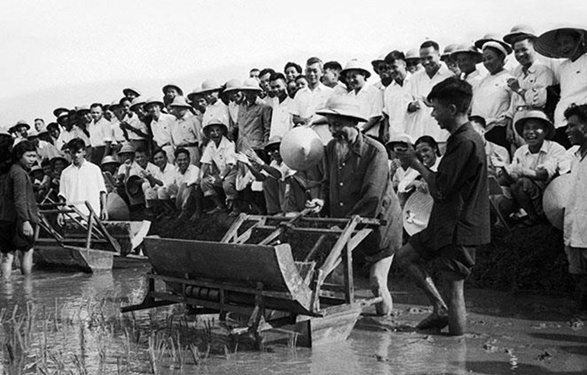 Chủ tịch Hồ Chí Minh đến thăm Sở Nông Lâm Hà Nội và sử dụng thử chiếc máy cấy tại ruộng thí nghiệm của Sở (7/1960). (Nguồn: TTXVN)