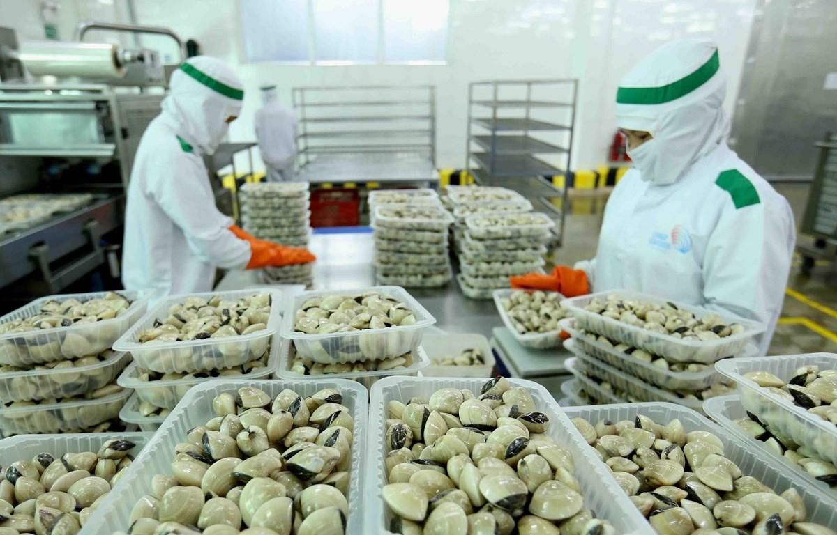 Đóng gói sản phẩm ngao nguyên con đông lạnh tại nhà máy của Công ty Thủy sản Lenger Việt Nam. Ảnh minh họa. (Ảnh: Vũ Sinh/TTXVN)