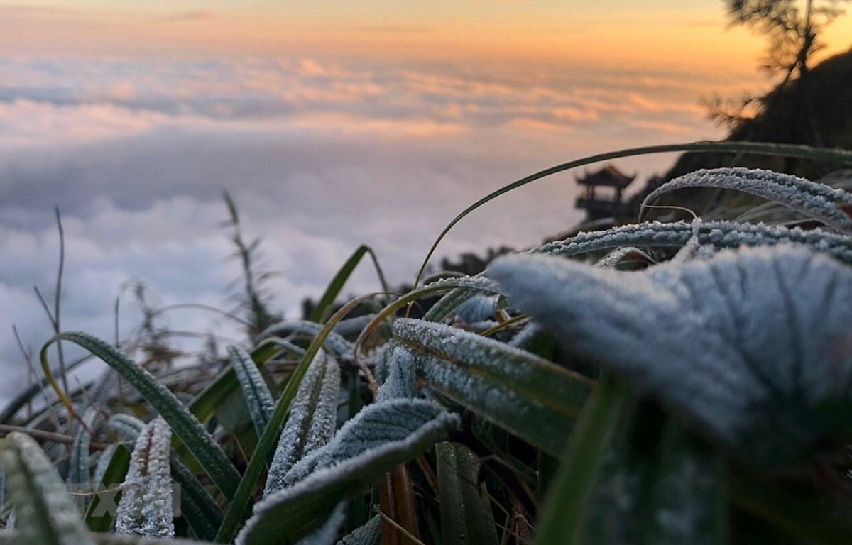 Sương muối phủ trắng trên đỉnh Fansipan. (Ảnh: Quốc Khánh/TTXVN)