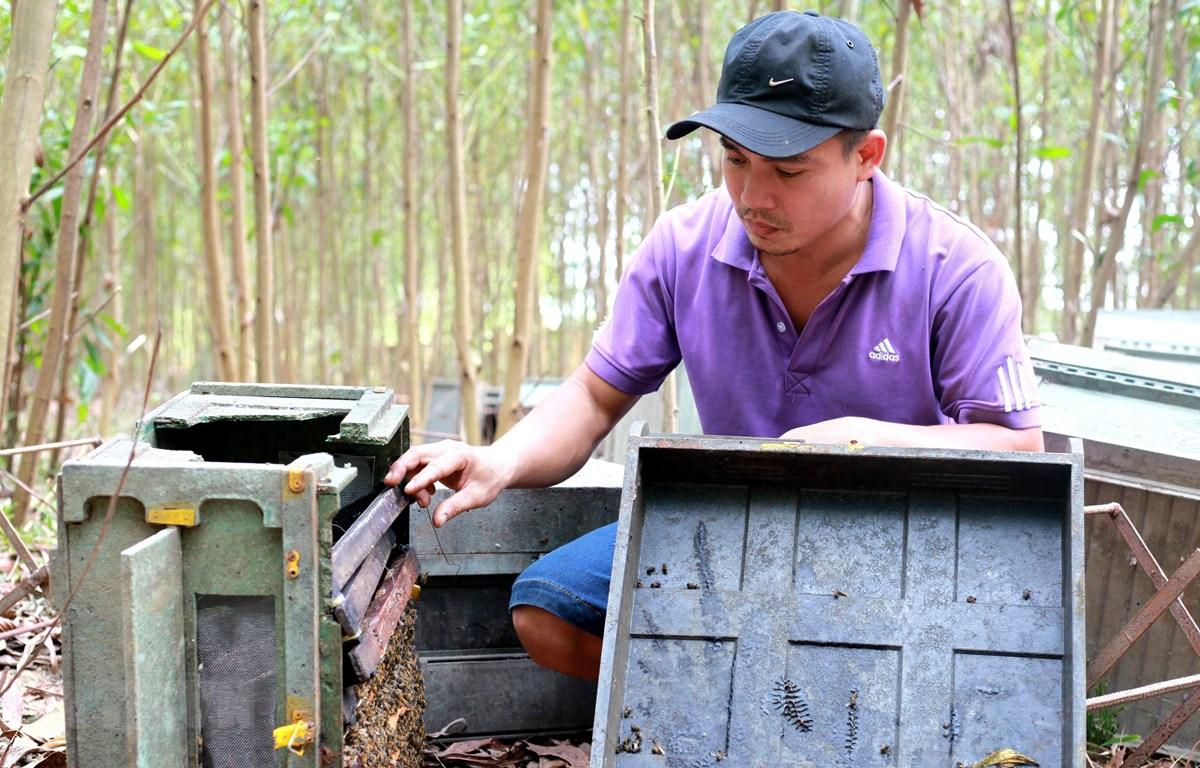 Anh Sơn, chủ trại ong dọn dẹp hiện trường, thu gom những trại ong còn sót lại. (Ảnh: Phước Ngọc/TTXVN)