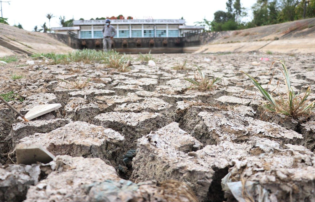 Lòng kênh trạm bơm Bình Phan (Tiền Giang) đã cạn khô, nứt nẻ do không lấy được nước ngọt. (Nguồn: TTXVN)