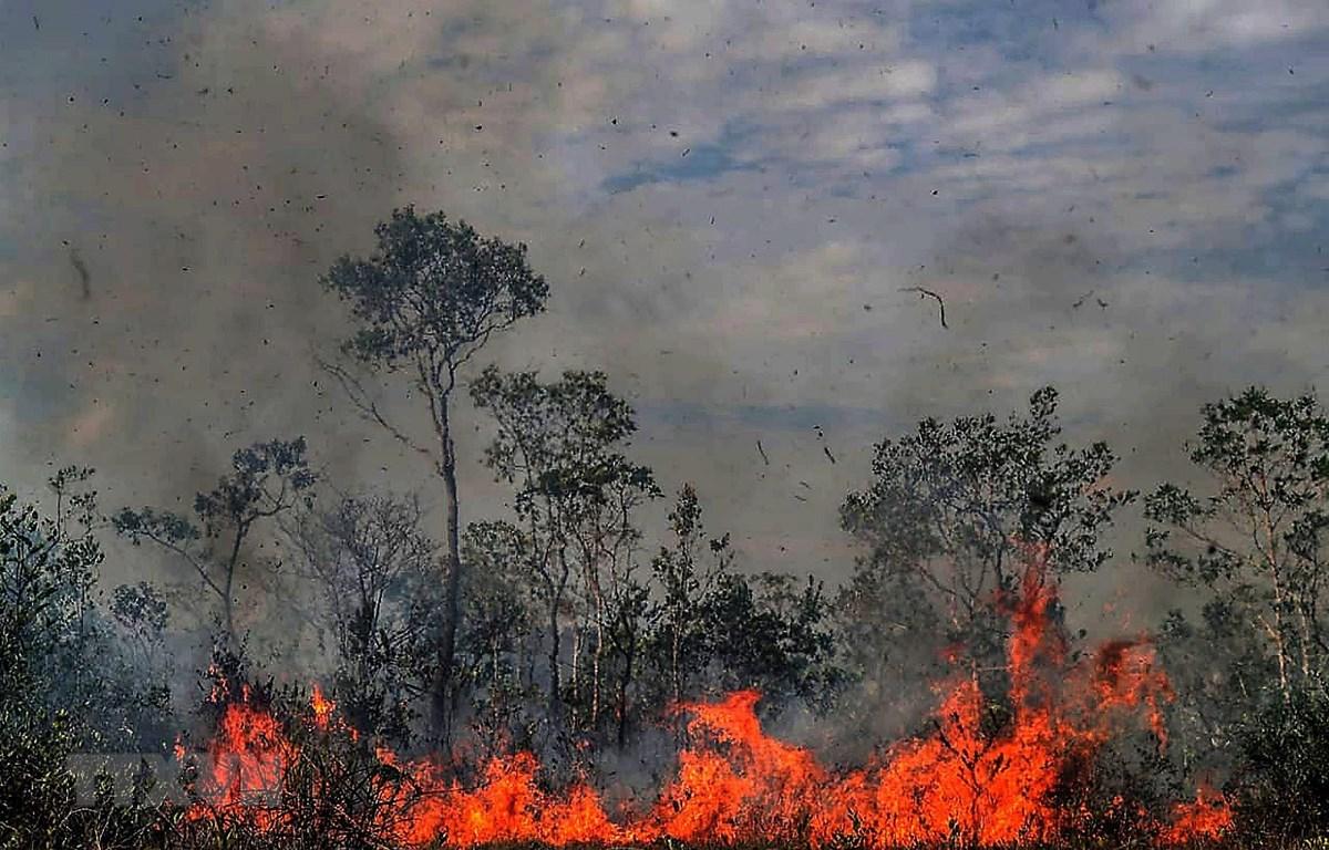 Trong ảnh: Khói lửa bốc cao trong vụ cháy rừng tại Amazonas,Brazil ngày 26/8. (Nguồn: THX/TTXVN)