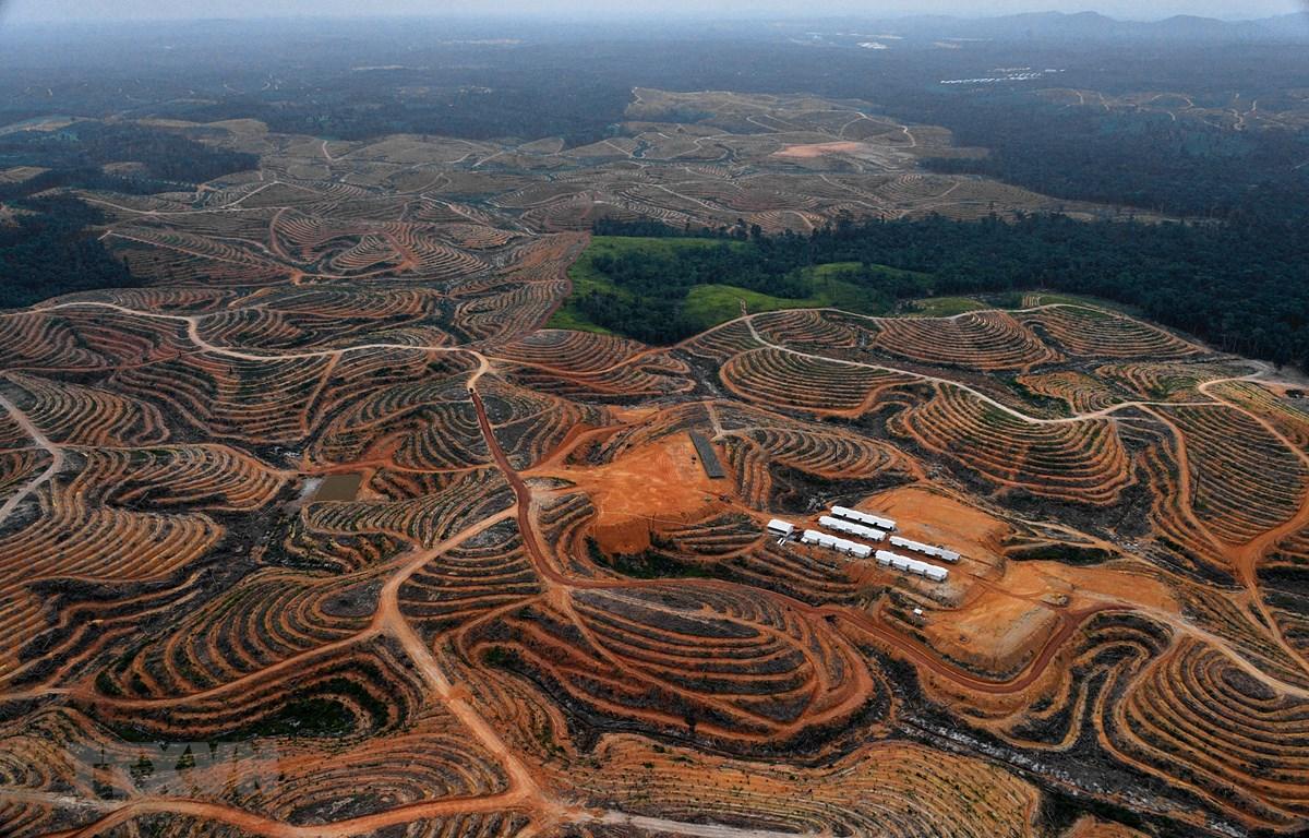 Trong ảnh (tư liệu): Quang cảnh vùng East Kotawaringin, tỉnh Kalimantan, Indonesia. (Nguồn: AFP/TTXVN)