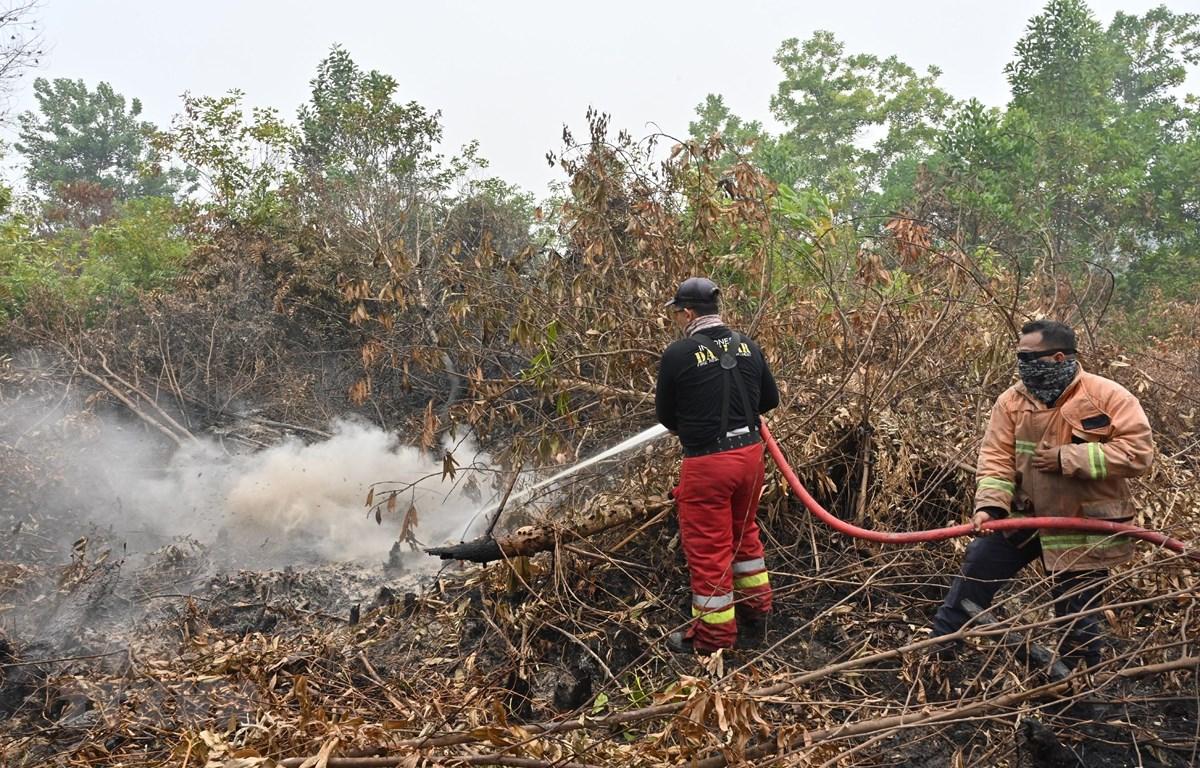 Lực lượng cứu hỏa nỗ lực dập lửa cháy rừng tại Kampar, Riau, Indonesia, ngày 13/9/2019. (Nguồn: AFP/TTXVN)