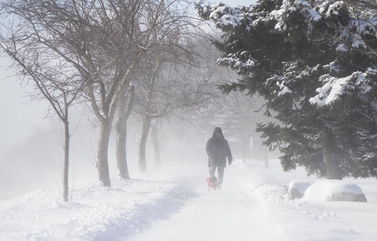 Tuyết phủ dày đặc tại Toronto, Canada, ngày 27/1/2019. (Ảnh: THX/ TTXVN)