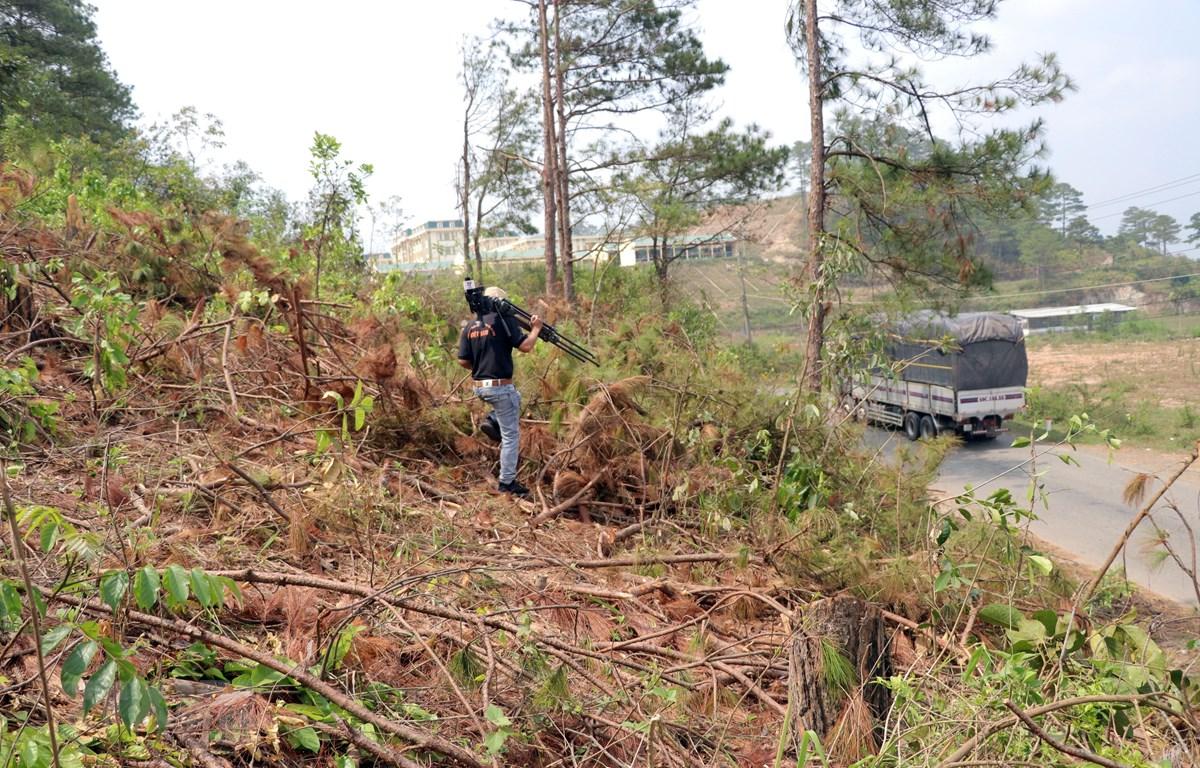 Cánh rừng bị lâm tặc cưa hạ chỉ cách Trung đoàn Cảnh sát cơ động (khối nhà phía sau) khoảng 200m. (Ảnh: Quốc Hùng, Đặng Tuấn/TTXVN)