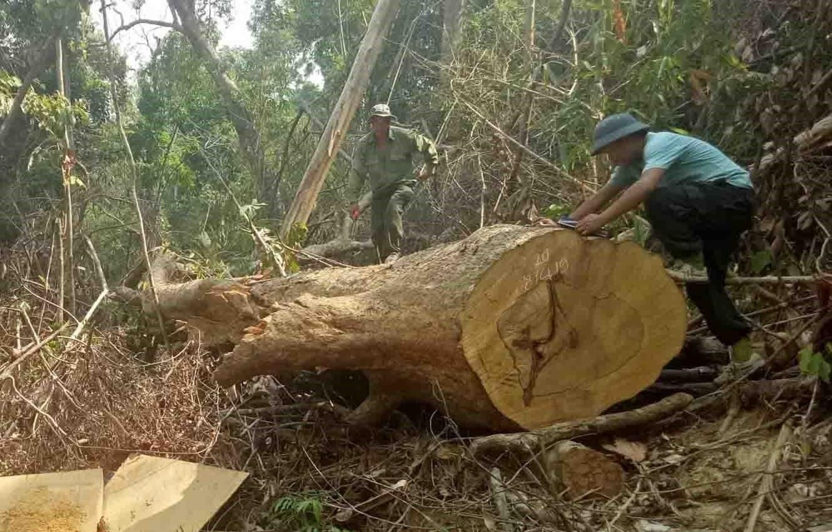 Hiện trường vụ phá rừng tại xã Cư Bông, huyện Ea Kar, Đắk Lắk. (Ảnh: TTXVN phát)