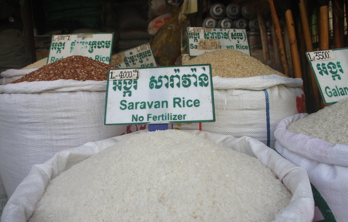 Một loại gạo ngon nổi tiếng của Campuchia-Pka tại Campuchia)