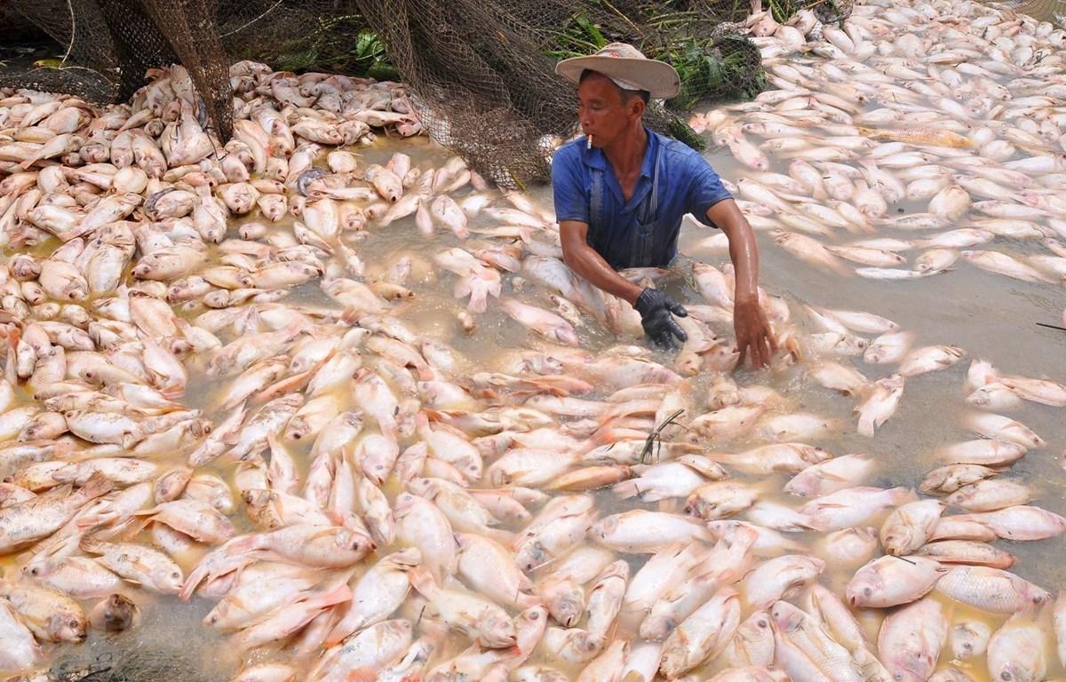 Cá chết trên sông La Ngà hồi tháng 5/2018. (Ảnh: Lê Xuân/TTXVN)
