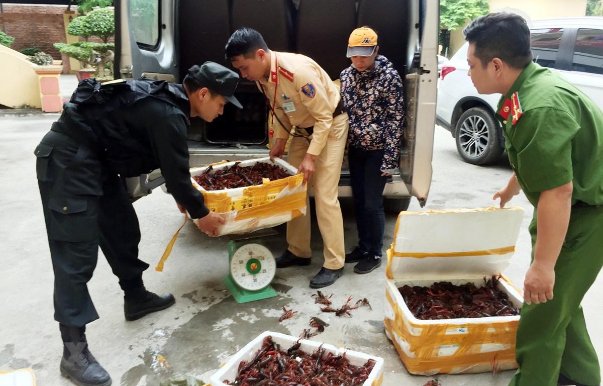 Ba thùng xốp đựng 49kg tôm hùm đất bị bắt giữ tại Lạng Sơn. (Ảnh: Thái Thuần/TTXVN)