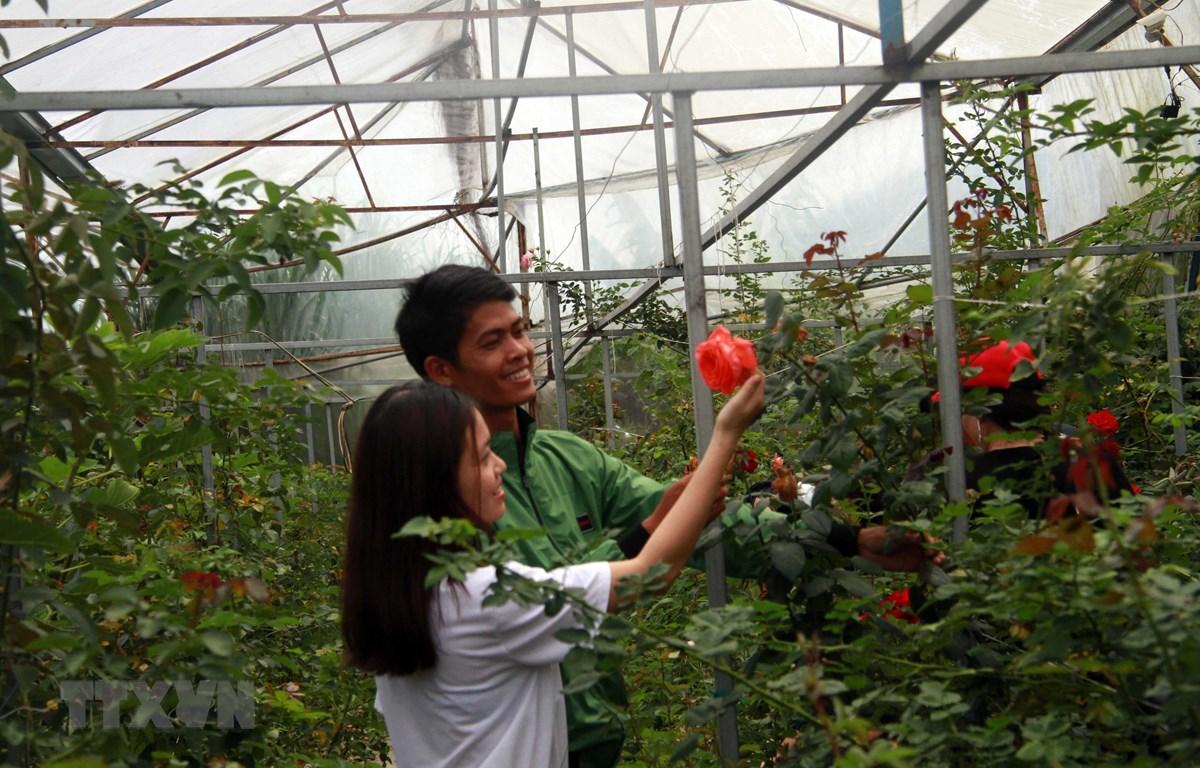 Du khách đến thăm trang trại hoa hồng tại Đà Lạt. (Ảnh: Đặng Tuấn/TTXVN)
