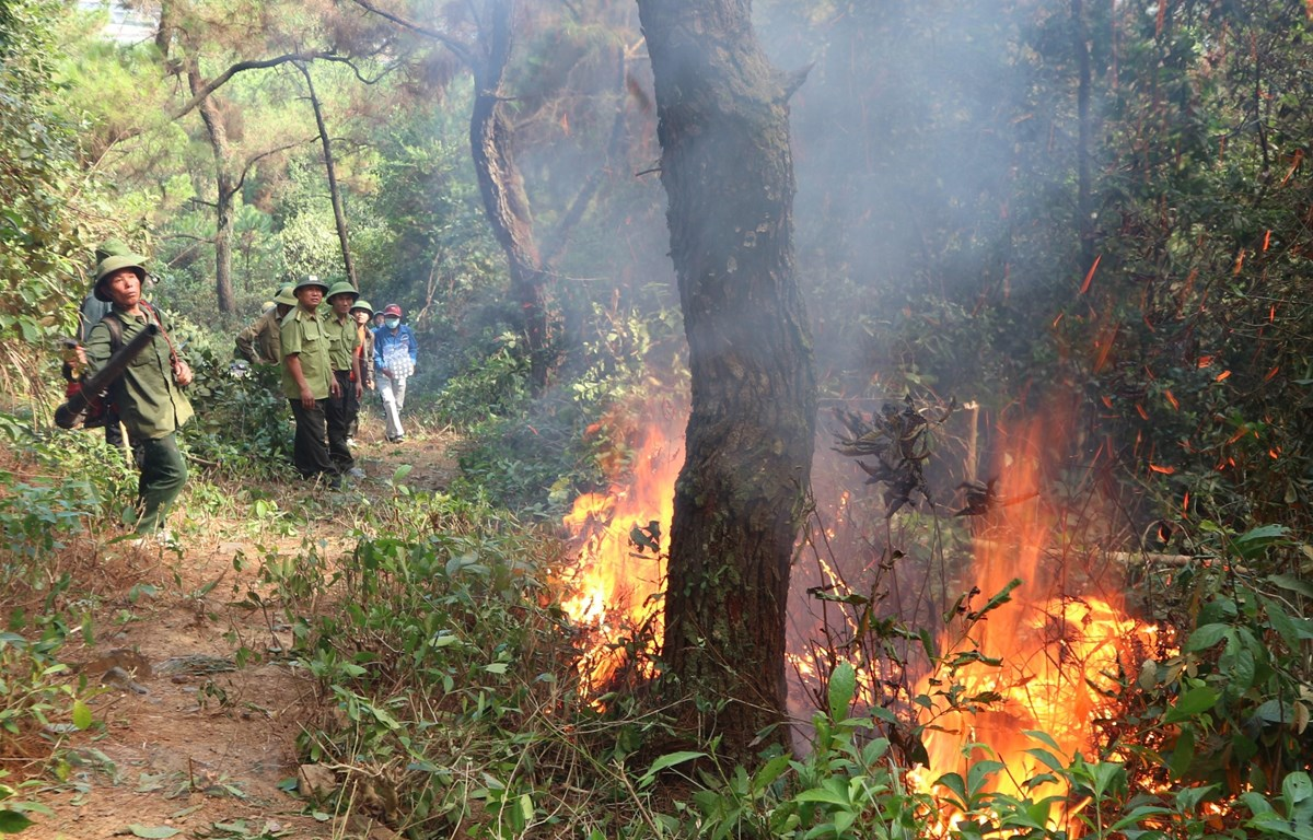 Lực lượng chức năng nỗ lực khống chế đám cháy. (Ảnh: Hoàng Ngà/TTXVN)