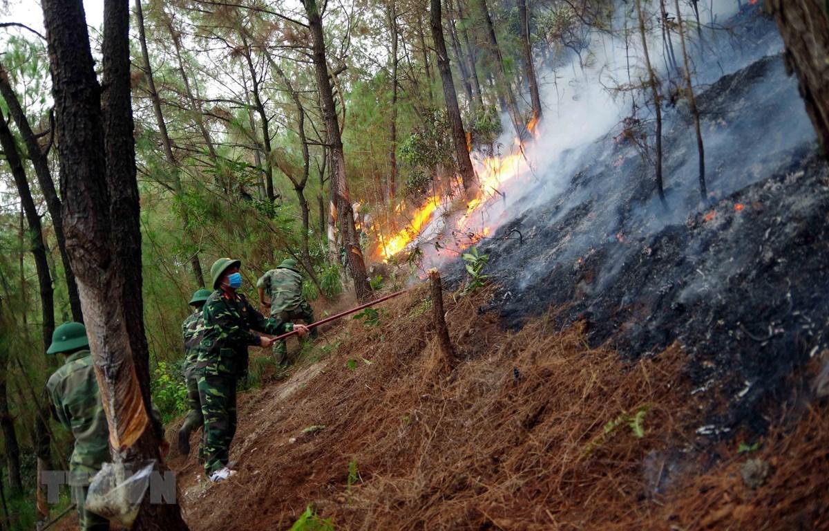 Khống chế đám cháy rừng tại Nam Đàn, Nghệ An. (Ảnh: TTXVN phát)