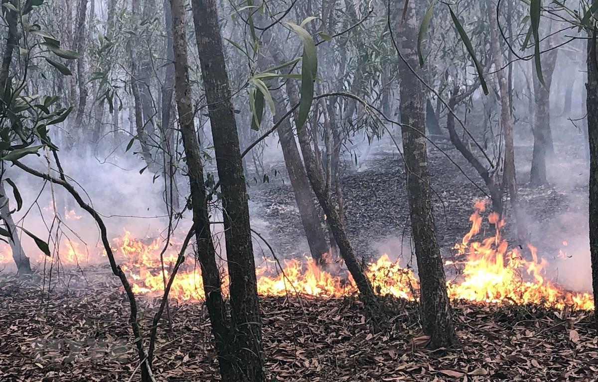 Cánh rừng trồng nguyên liệu đang bị cháy. (Ảnh: Trần Tĩnh/TTXVN)
