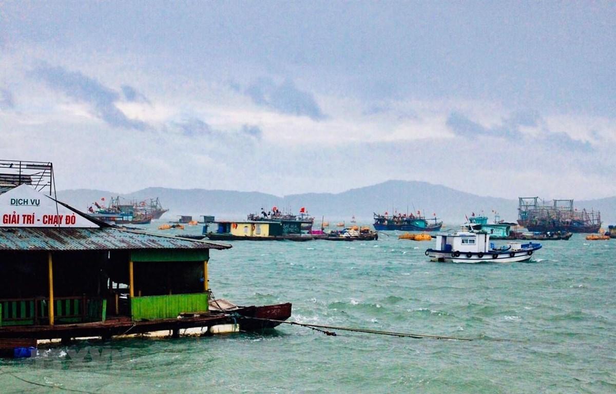 Tại đảo Cô Tô, hơn 500 tàu thuyền đang neo đậu. (Ảnh: TTXVN phát)