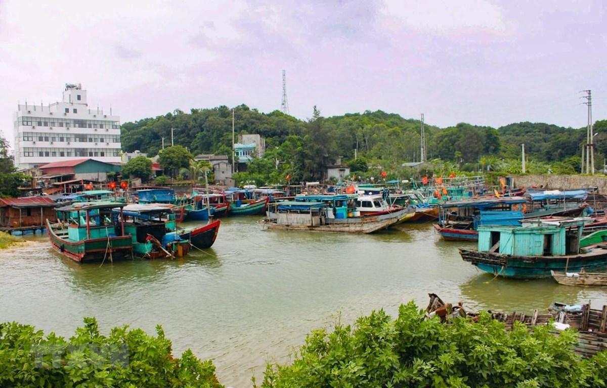 Hơn 500 tàu thuyền đang neo đậu tại đảo Cô Tô. (Ảnh: TTXVN phát)