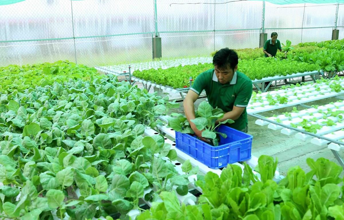 Hợp tác xã Nông sản hữu cơ Kiên Giang, phường An Bình, thành phố Rạch Giá. (Ảnh: Vũ Sinh/TTXVN)