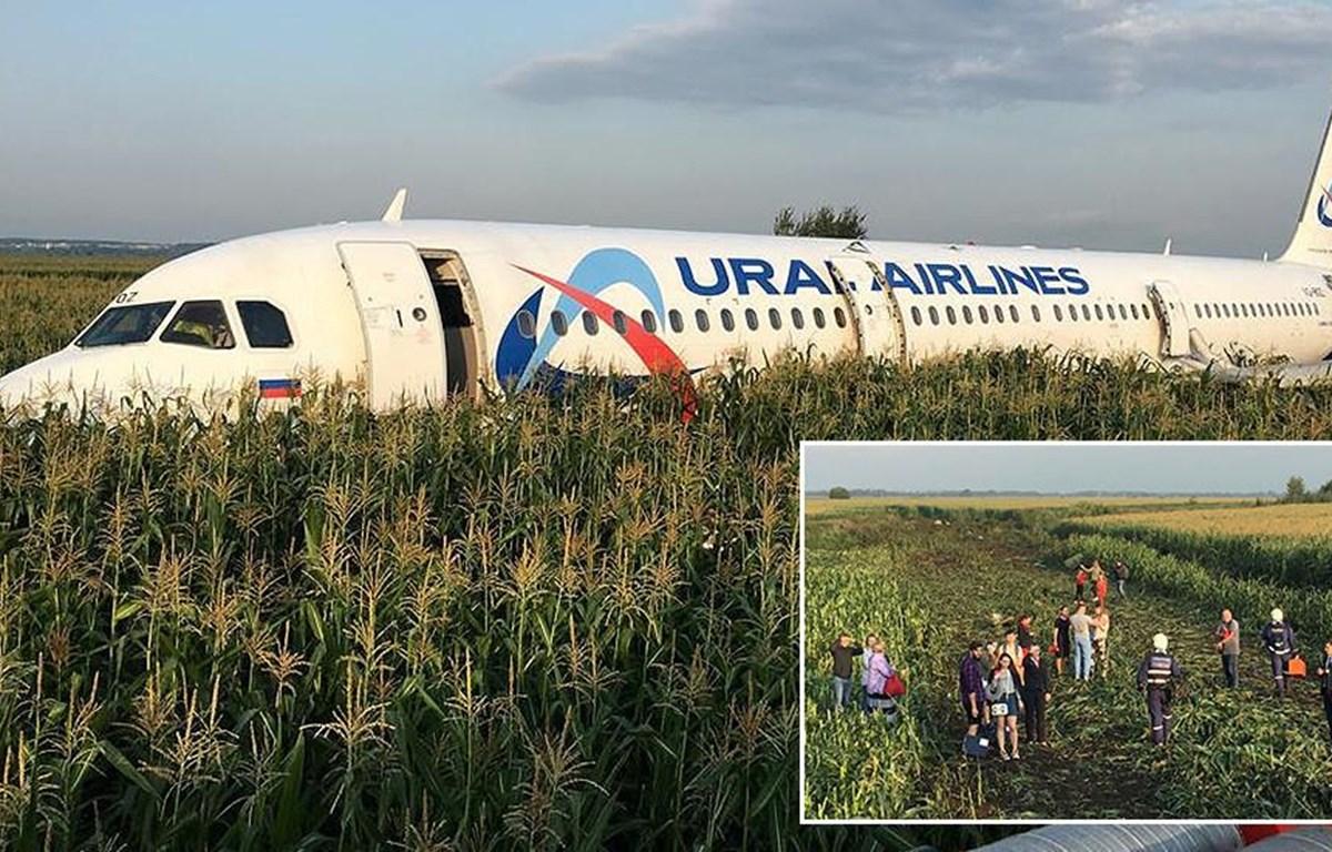 Chiếc A320 của hãng hàng không Ural Airlines phải hạ cánh xuống một cánh đồng (Nguồn: RT)