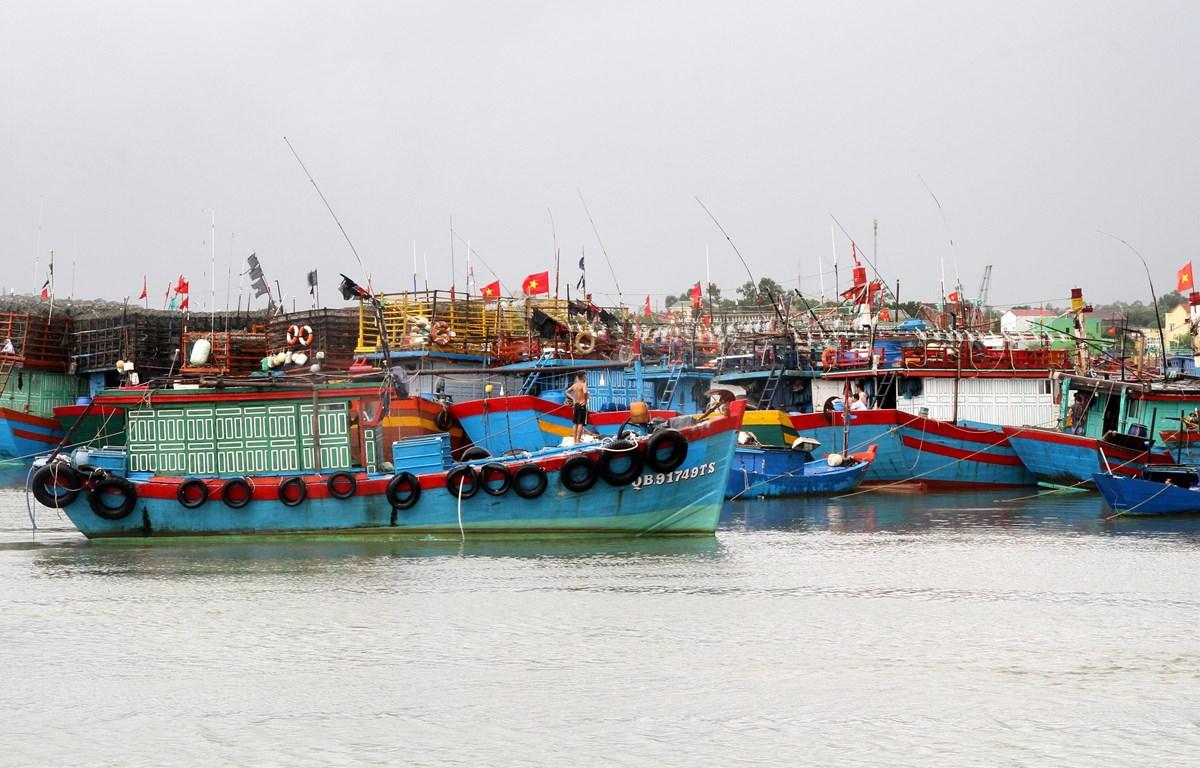 Hơn 100 tàu thuyền neo đậu tại khu tránh trú bão Nhật Lệ. (Ảnh: Văn Tý/TTXVN)