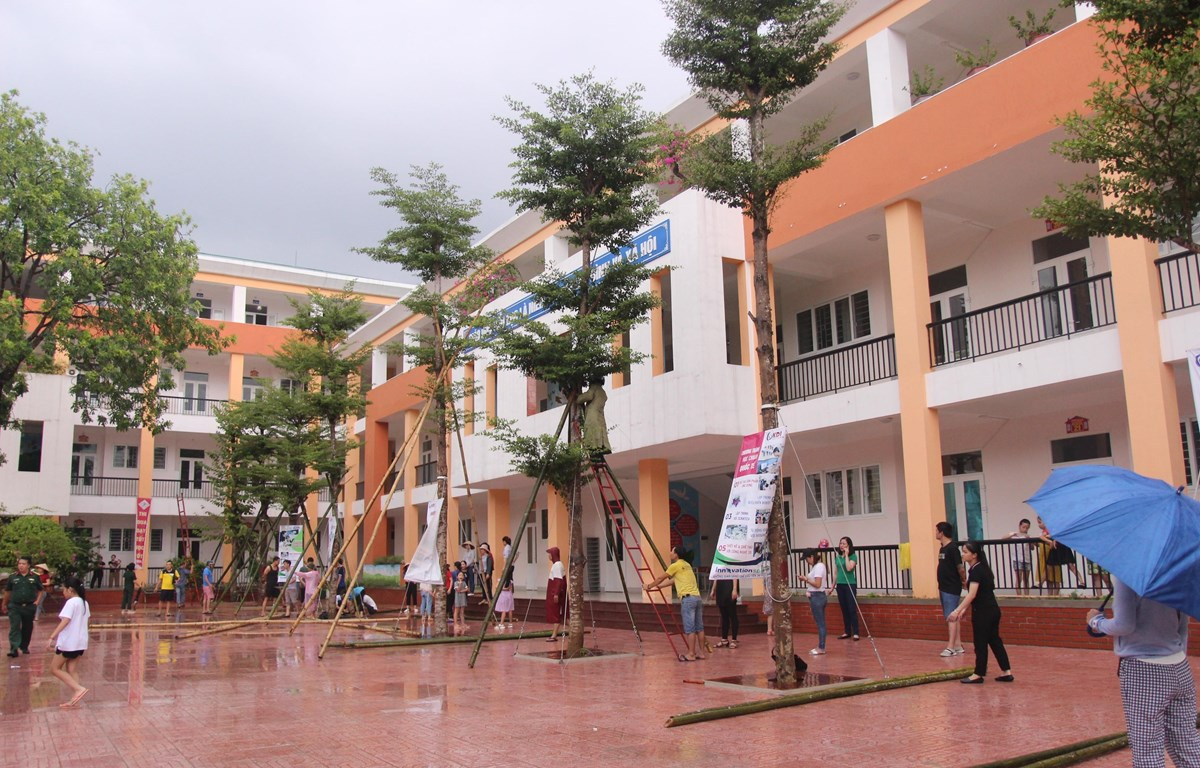 Phụ huynh Trường Tiểu học Lê Mao giúp nhà trường chằng néo cây xanh chống bão. (Ảnh: Bích Huệ/TTXVN)