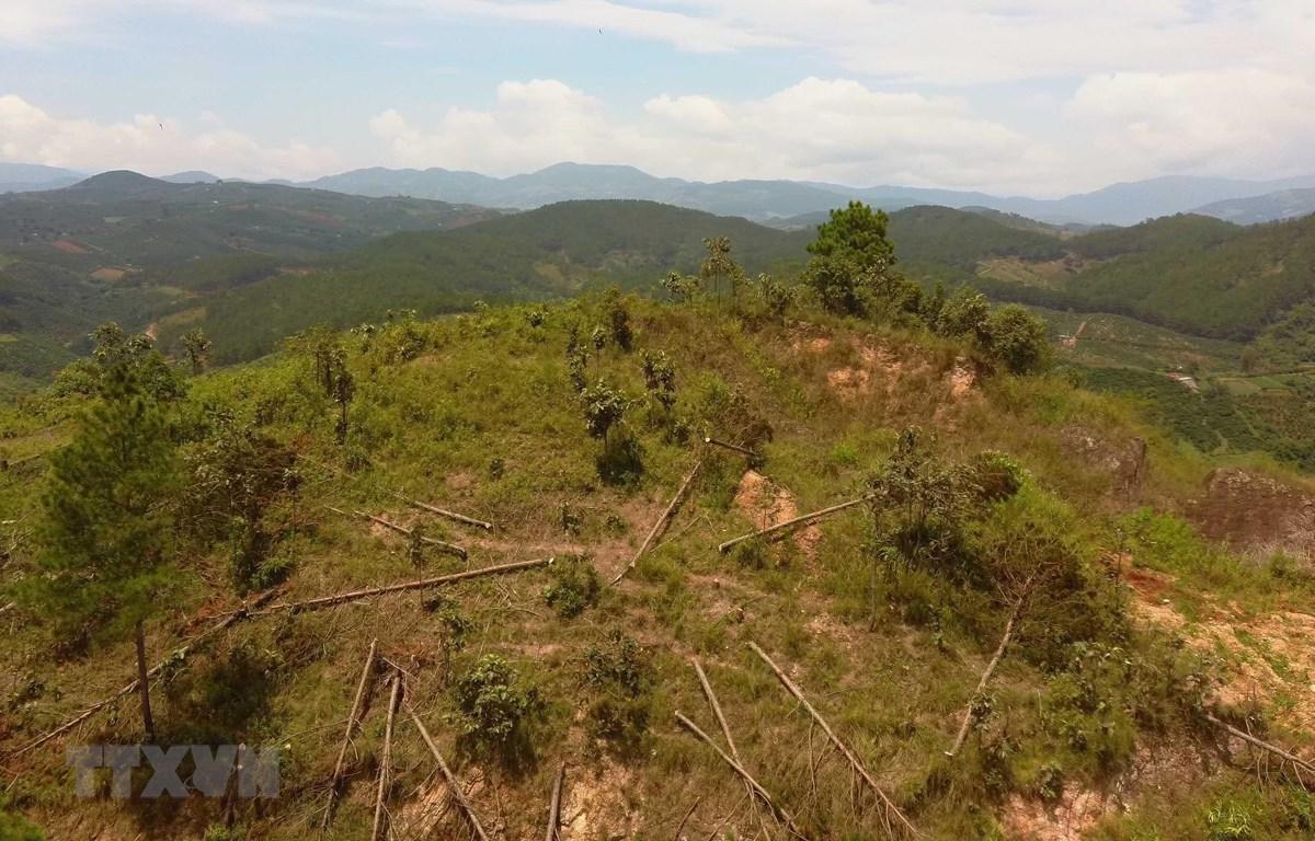 Hiện trường vụ việc tại tiểu khu 261B, địa bàn xã Nam Hà, huyện Lâm Hà. (Ảnh: Đặng Tuấn/TTXVN)
