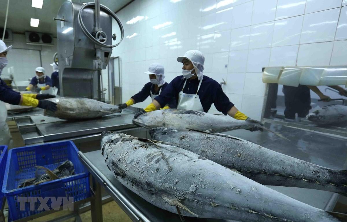 Chế biến cá ngừ đại dương đông lạnh xuất khẩu tại nhà máy của Công ty Cổ phần Thủy sản Bình Định. (Ảnh: Vũ Sinh/TTXVN)