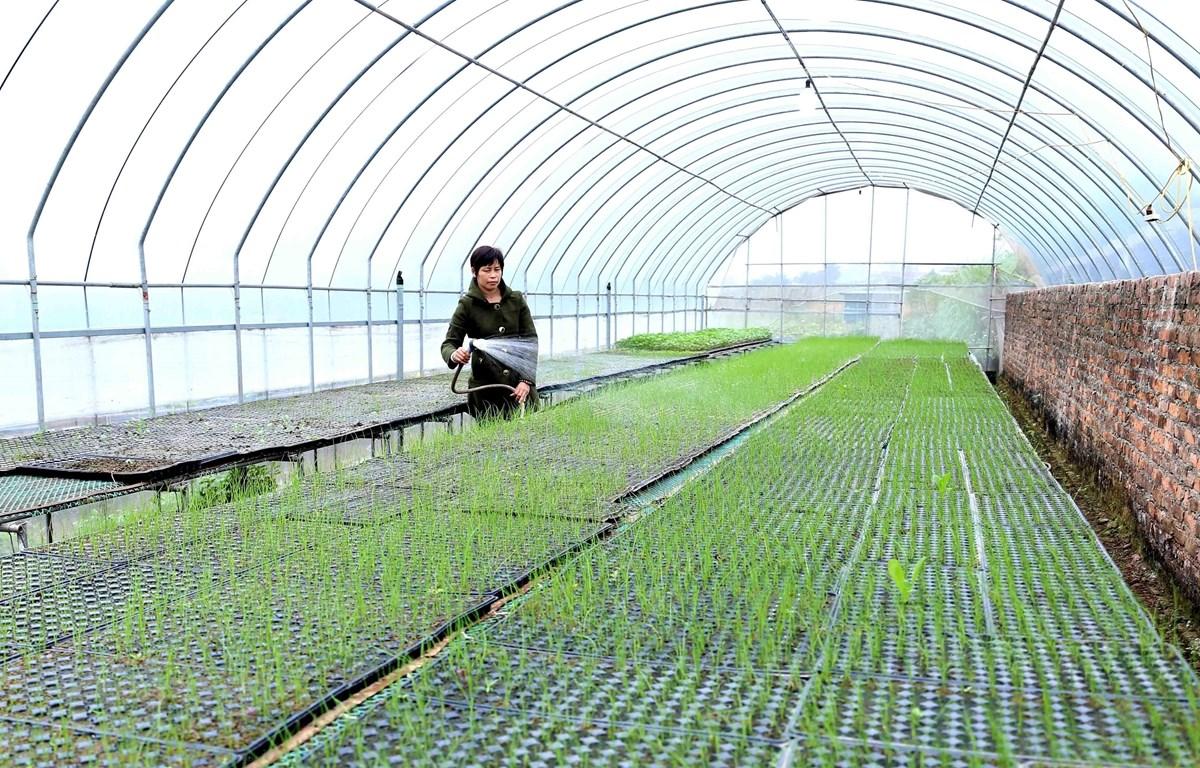 Hợp tác xã sản xuất rau hữu cơ Cuối Quý Đan Phượng, xã Đan phượng, huyện Đan Phượng đầu tư sản xuất theo quy hoạch sản xuất nông nghiệp theo tiêu chí nông thôn mới. (Ảnh: Vũ Sinh/TTXVN)