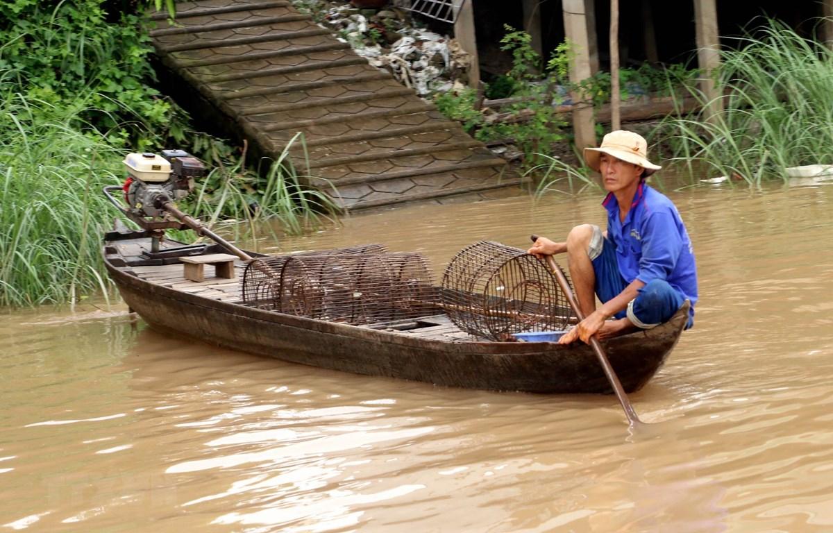 Người dân xã Vĩnh Lộc (An Phú, An Giang) tranh thủ con nước về thả lọp bắt cá. (Ảnh: Công Mạo/TTXVN)