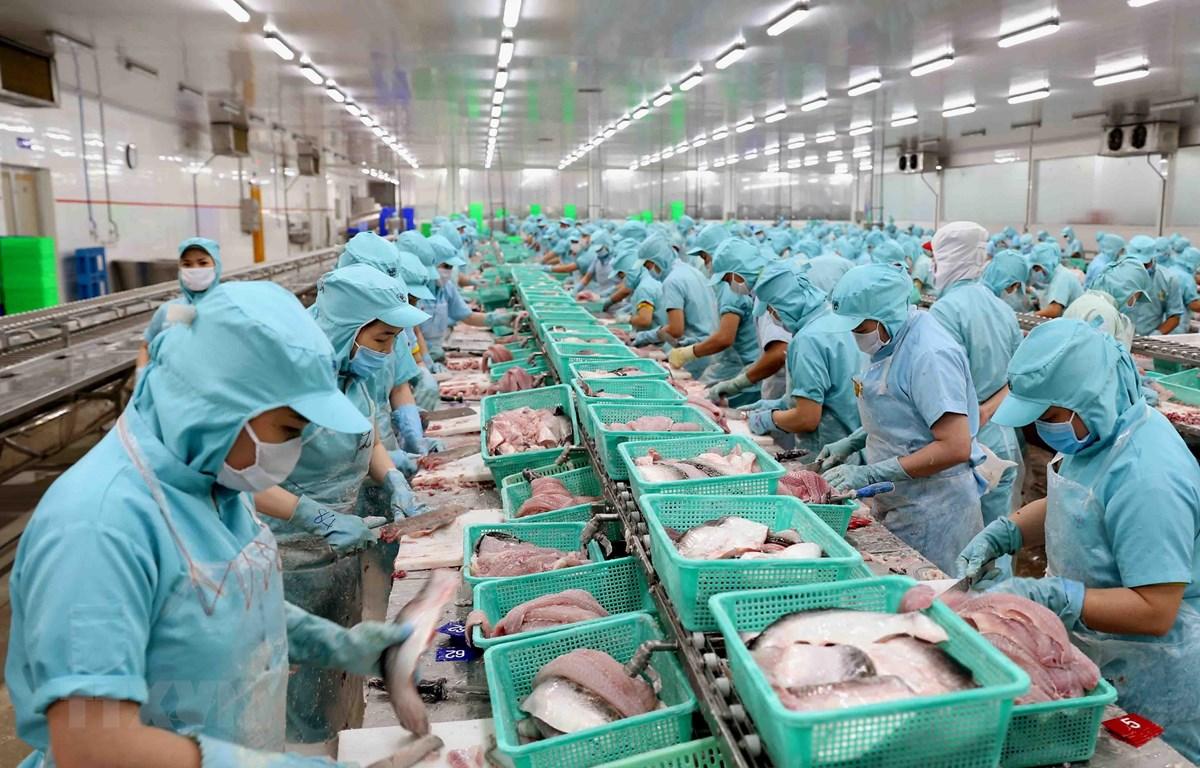 Dây chuyền chế biến philê cá tra xuất khẩu tại nhà máy của Công ty. (Ảnh: Vũ Sinh/TTXVN)