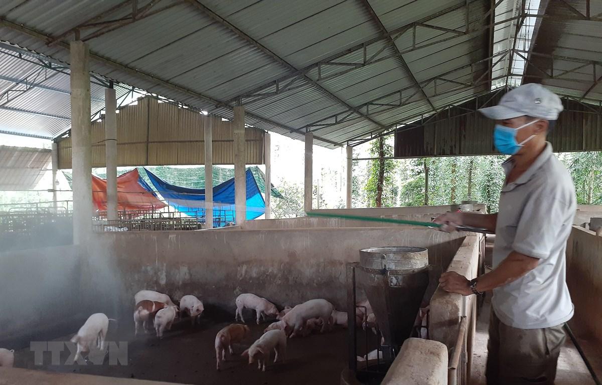 Phun hóa chất phòng, chống dịch tả lợn châu Phi tại trang trại chăn nuôi lợn của gia đình ông Phạm Minh Hiền, xã Xà Bang, huyện Châu Đức, Bà Rịa-Vũng Tàu. (Ảnh: Hoàng Nhị/TTXVN)