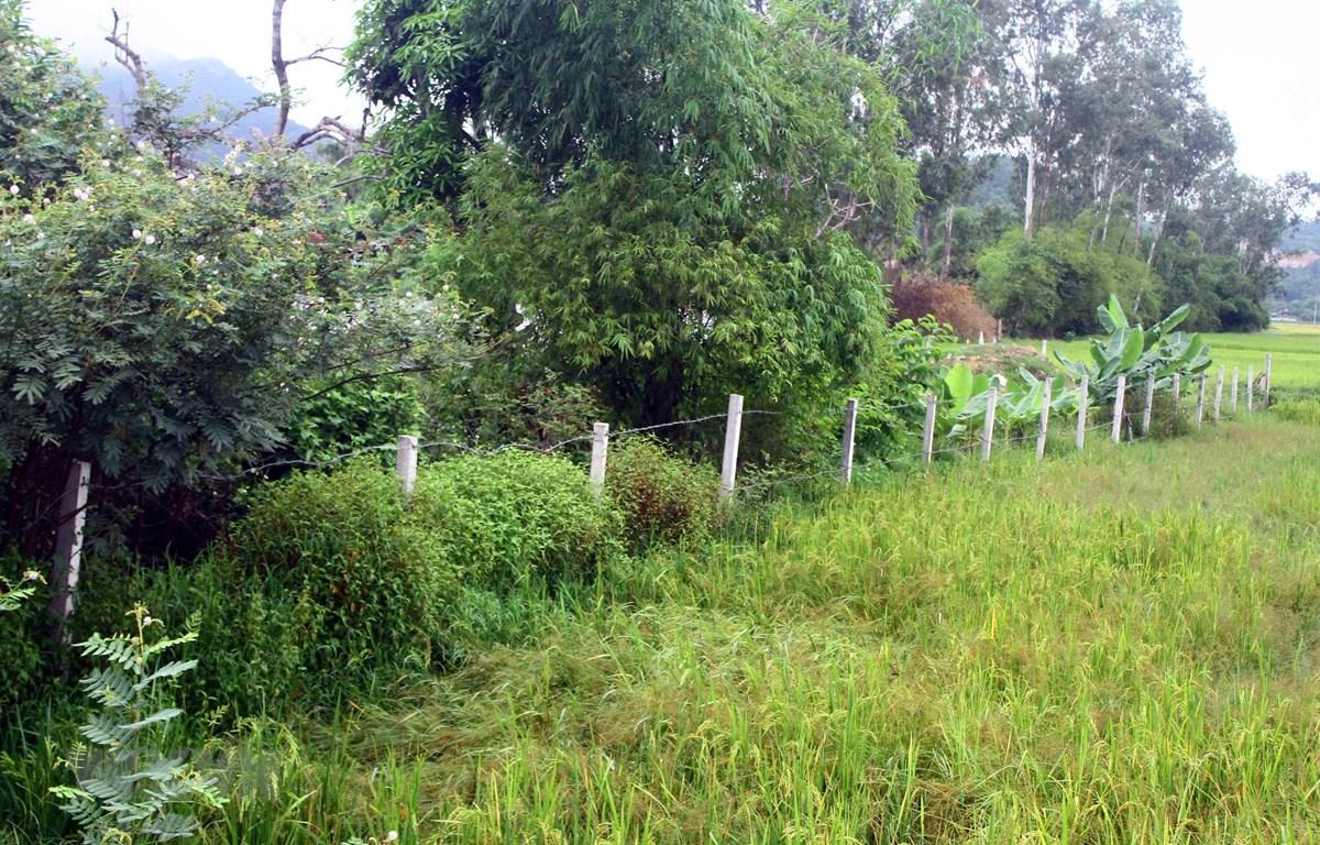 Đất nông nghiệp ở Nghệ An. (Ảnh: Tá Chuyên/TTXVN)