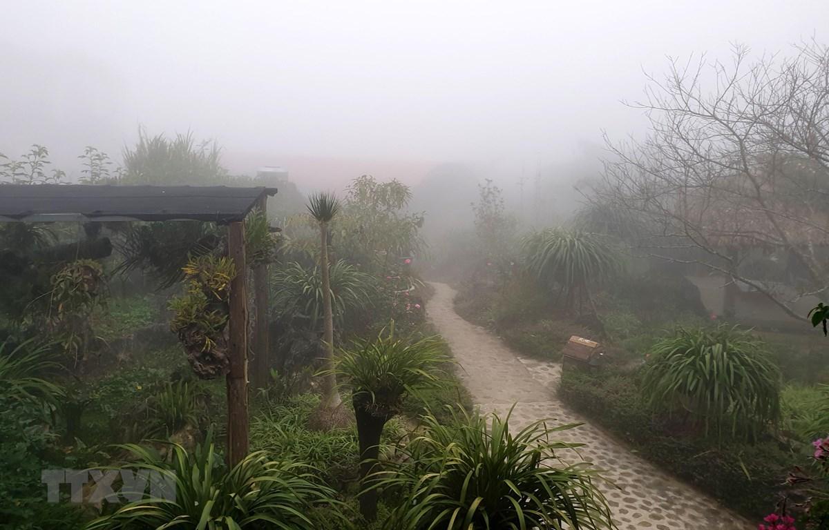 Sương mù dày đặc ảnh hưởng hoa màu và cây trồng tại thị trấn Sapa. (Ảnh: Quốc Khánh/TTXVN)