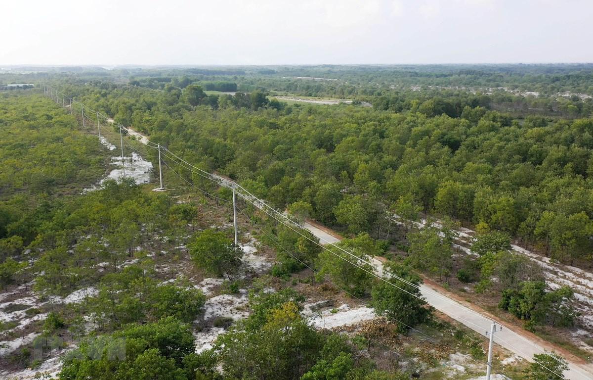 Rừng phòng hộ trên cát ở huyện Phong Điền, Thừa Thiên-Huế. (Ảnh: Hồ Cầu/TTXVN)
