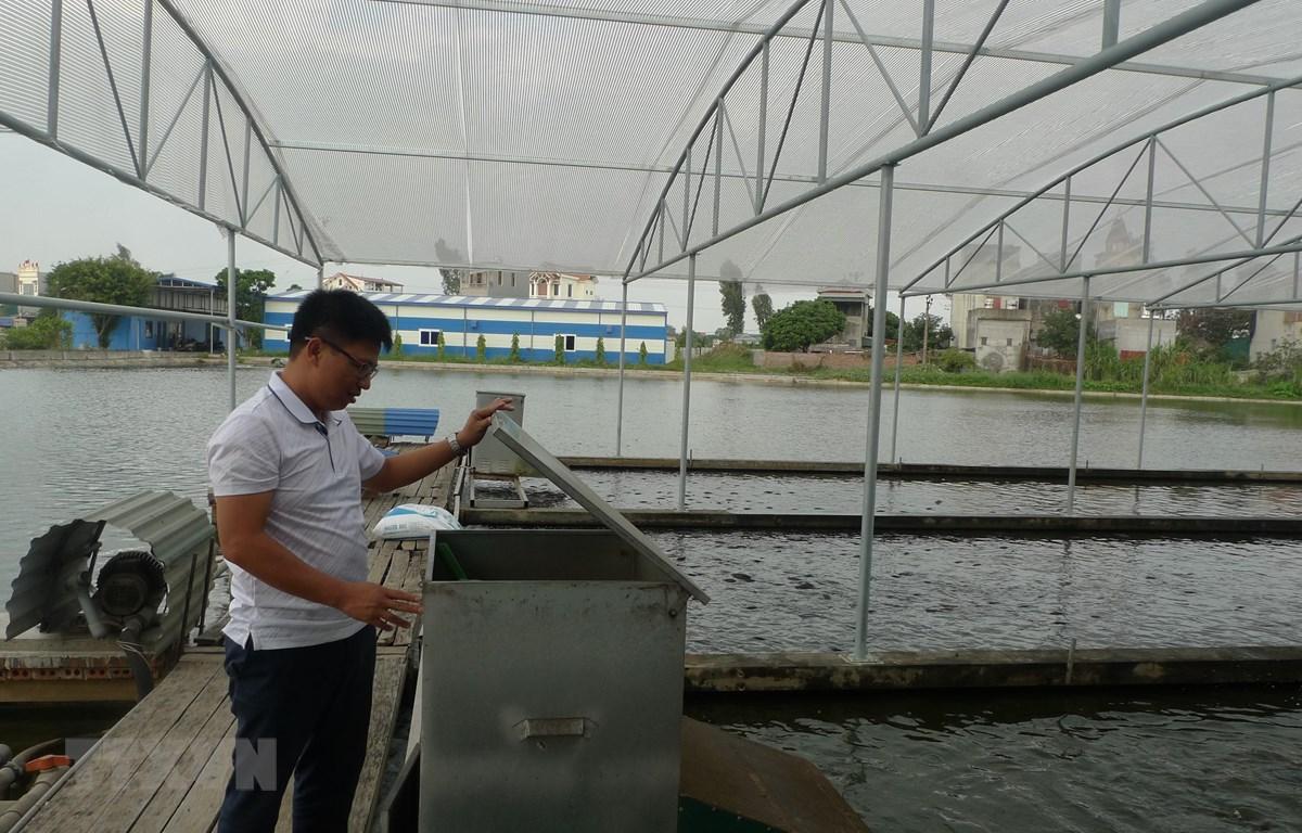 Anh Lê Văn Việt, chủ hợp tác xã sản xuất và thương mại Xuyên Việt (huyện Gia Lộc, Hải Dương) kiểm tra máy cho cá ăn tự động. (Ảnh: Thanh Nga/TTXVN)