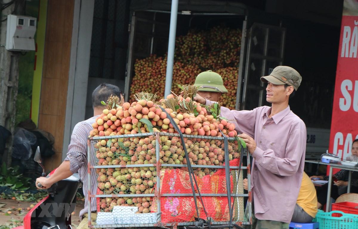 Điểm thu mua vải trên đường 390, huyện Thanh Hà (ảnh tư liệu). (Ảnh: Mạnh Minh/TTXVN)