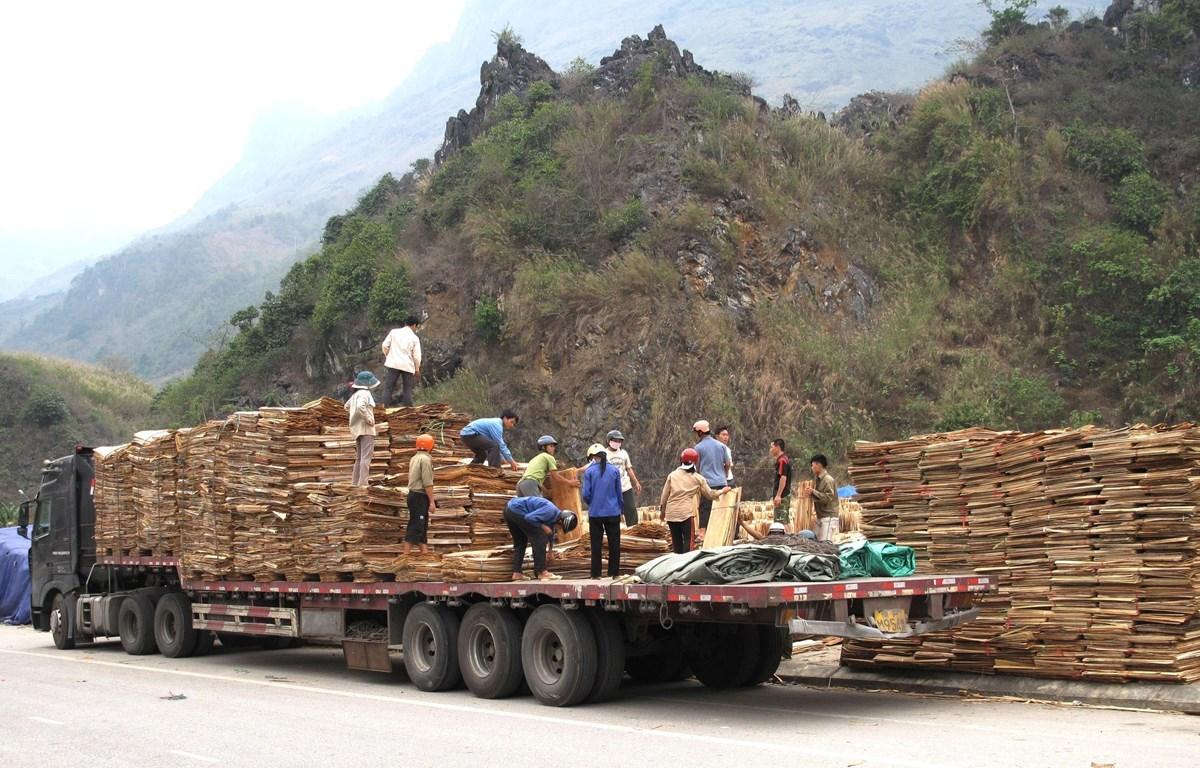 Ván bóc xuất khẩu sang Trung Quốc tại Cửa khẩu Quốc tế Thanh Thủy (Hà Giang). (Ảnh: Minh Tâm/TTXVN)